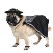 Como hacer un disfraz facil para mascotas