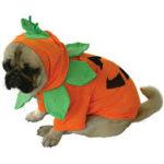 Disfraces para mascotas con forma de calabaza.