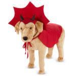 Ideas faciles para disfrazar mascotas.