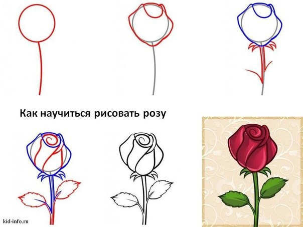 Como Dibujar Rosas Rojas Realistas 2