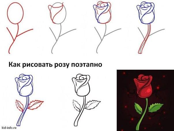 Como Dibujar Rosas Rojas Realistas 4