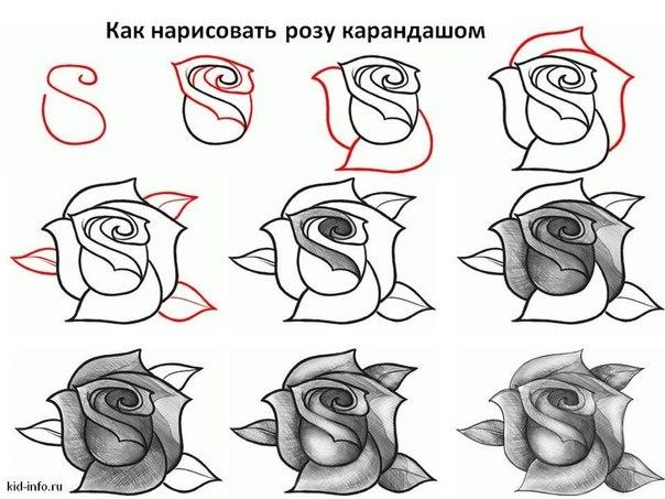Como Dibujar Rosas Rojas Realistas